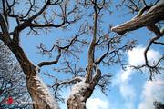 تصاویر | درختان یخ زده در خواب زمستانی