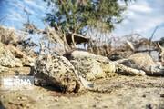 تصاویری دردناک از تلف شدن حیوانات در سیل سیستان و بلوچستان