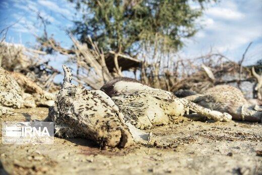 اتلاف احشام در سیلاب بلوچستان