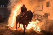 فیلم | تطهیر روح حیوانات اسپانیایی با آتش