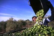 چرا قیمت محصولات ایرانی در کشورهای دیگر تعیین میشود؟