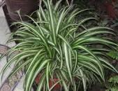 ۷ گیاهی که به پاکسازی هوای خانه شما کمک میکند