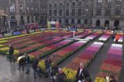 فیلم | ۲۰۰ هزار شاخه گل لاله میدان معروف آمستردام