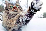 تصاویر | روزگار دیدنی حیوانات در سرمای زمستان
