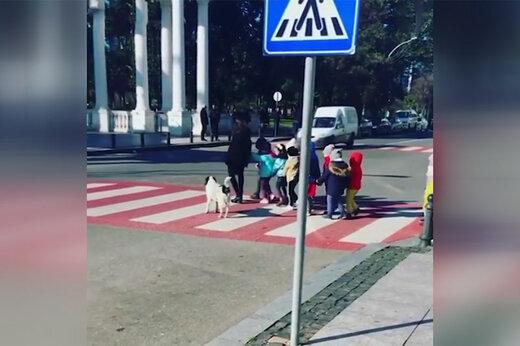 فیلم   سگ ولگردی که بچه ها را از خیابان رد میکند