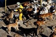 اینجا غرب تهران؛ دهکدهای برای سگها