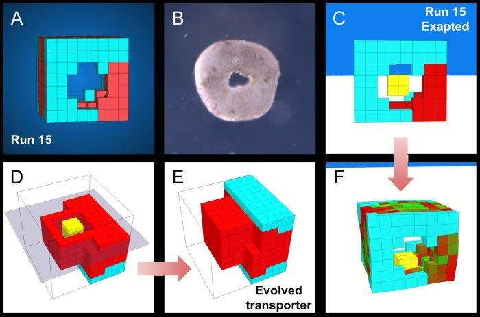 اولین ربات ساخته شده از یک سلول زنده