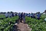 تولید محصولات کشاورزی خانگی در فردیس ترویج می شود