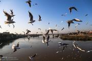 علت اصلی مرگ پرندگان میانکاله مشخص شد