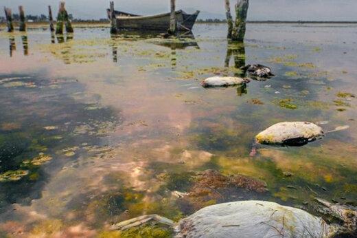 فیلم | وضعیت اسفبار پرندگان میانکاله