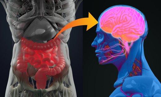 باکتریهای روده، شخصیتمان را شکل میدهند!