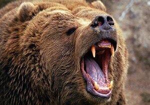 مصدوم شدن پیرمرد روستایی به علت حمله خرس