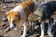 جزییاتی جدید درباره حمله اخیر سگهای ولگرد به یک دختربچه