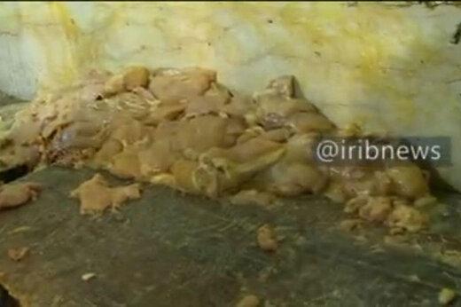 ببینید | پلمپ رستورانی در تهران به جرم انواع و اقسام تخلفات بهداشتی!