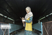 تصاویر | اشتغال زنان در قلعه گنج