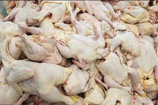 مرغ شب عید تامین شد؛ یک میلیون تن لبنیات صادر کردیم