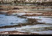 این خلیج ۴ سال دیگر خشک میشود؟