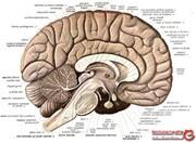 انسانی 2600 ساله با مغزی سالم و دست نخورده! +تصاویر