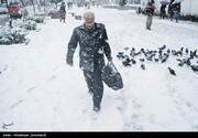 رشت اینچنین زیر برف رفت/ تصاویر