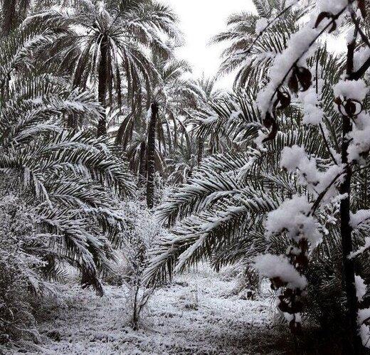 برف بغداد و کربلا را هم سفیدپوش کرد