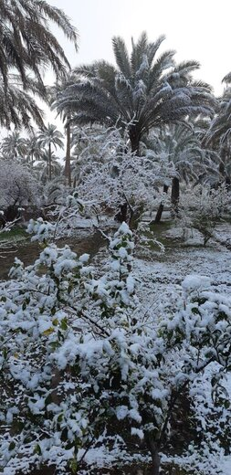 برف کربلا را هم سفیدپوش کرد