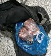 شکارچیان خوک در مازندران بازداشت شدند