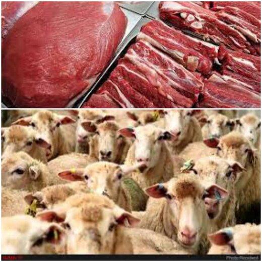 ادعای صادرات گوشت قرمز و دام زنده از آذربایجانشرقی تکذیب شد