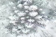 تصاویری دیدنی از جنگلهای اسالم به خلخال پس از بارش برف از زاویهای که تاکنون ندیدهاید