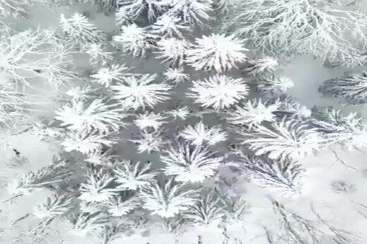 تصاویری دیدنی از جاده اسالم به خلخال پس از بارش برف از زاویهای که تاکنون ندیدهاید