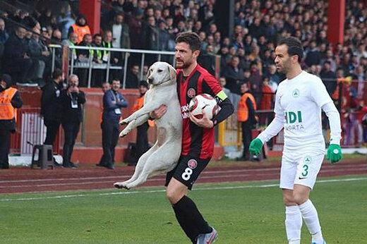 ببینید   ورود ناگهانی یک سگ به زمین فوتبال و باقی ماجرا