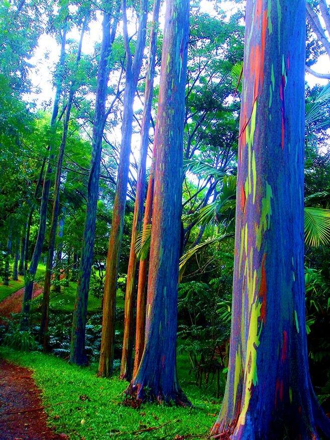 جنگل رنگی فیلیپین