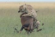 ببینید | فست فود در ساوانای کنیا
