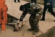 ببینید | کشتار سگ و گربه ها در روستایی در چین برای جلوگیری از شیوع کرونا