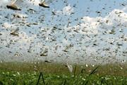 ببینید | تصاویر دلهره آور حمله ملخها به منامه !