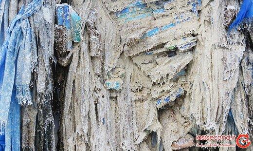 درخت اسرارآمیزی که دروازه ای رو به جهانی دیگر است! +تصاویر