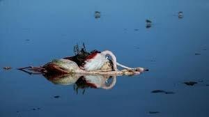 شکایت حفاظت محیط زیست مازندران از شکارچیان