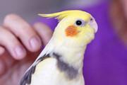ببینید | آیا ویروس کرونا از حیوانات خانگی منتقل می شود؟