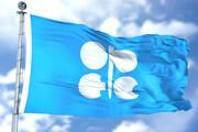 اوپک تولید را کاهش ندهد قیمت نفت سقوط میکند
