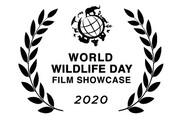 نمایش مستند ایرانی در سازمان ملل