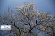 تصاویر | نشانههای بهار در باغات منصوریه بهبهان