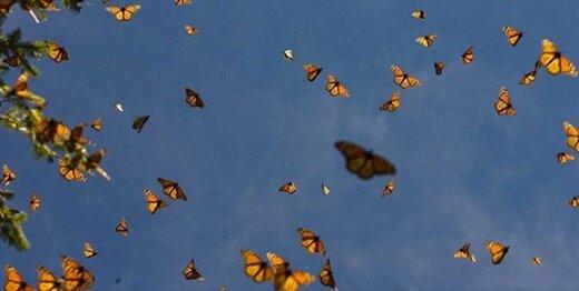 تهران صاحب باغ پروانهها میشود