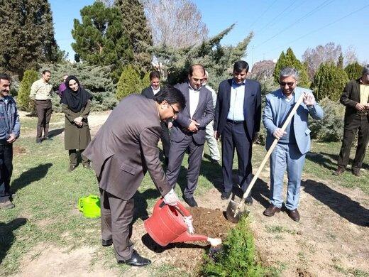آغاز توزیع ۵۰۰ هزار اصله نهال در استان/کاشت نمادین درخت در استانداری سمنان