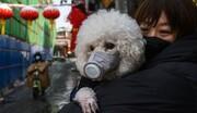 ببینید | تکذیب خبر رسانه ملی درباره انتقال کرونا از طریق حیوانات خانگی توسط انجمن دامپزشکی