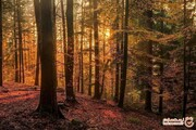 زیباترین جنگل های جهان، رویاهایی که واقعیت دارند! +تصاویر