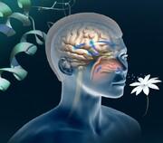 آیا اختلالات بویایی با کووید ۱۹ مرتبط است؟