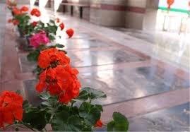 غبار روبی گلزار شهدای شیراز