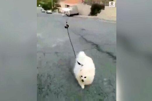 ببینید   پیاده روی یک سگ همراه با پهپاد بدلیل شیوع کرونا در قبرس