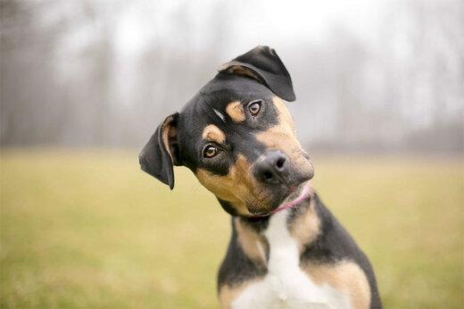 ببینید | سگها هم کرونا میگیرند هم ناقل هستند