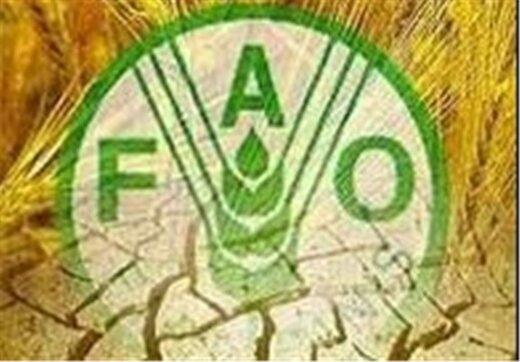 پیش بینی فائو از گرانی مواد غذایی در جهان