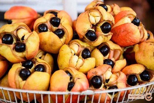 غذاهای خطرناکی که خوردنشان گریبان دنیا را می گیرد!